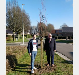 Gemeente plant vijfhonderd nieuwe straatbomen