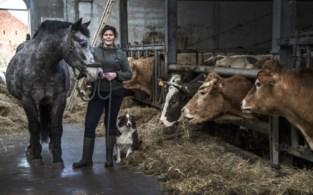 Voor wie alles op rijtje wil zetten: ontstressen op de boerderij