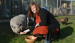 Communie- of vrijgezellenfeestje? Sieglinde en Quinten komen aan huis met alpaca: