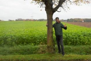 Actiecomité vraagt alternatieven in plaats van kap van 101 'geadopteerde' lindebomen
