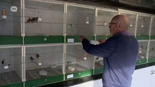 Cor Brands rijft wereldtitels binnen met zijn vogels