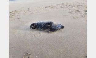 Gezonde zeehondjes krijgen stem op sociale media (en daar is een goede reden voor)