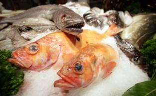 """Beruchte drugsfamilie van de 'Visboeren' riskeert 7 jaar cel: """"Hoogstens enkele viskes in 't zwart verkocht"""""""