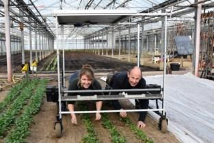 """Bioboeren bouwen afgedankte rolstoelen om tot landbouwmachines: """"Beter voor de rug, goedkoper en minder tijdrovend"""""""