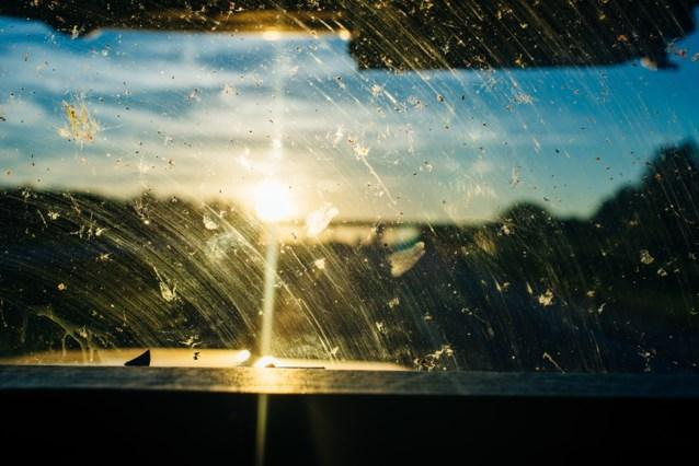 80 procent minder insecten vliegen zich te pletter op autoruit (en dat is geen goed nieuws)
