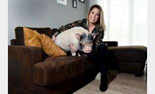"""Zoë heeft geen spijt van atypisch huisdier: """"Al kon een man zich niet echt vinden in het idee van een varken in zijn living"""