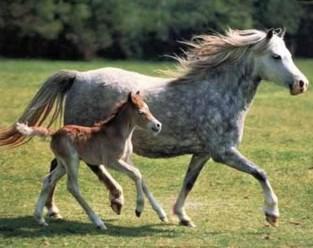Gemeente begint met verdere uitbouw landschapspark Muilshoek: dertien parkeerplaatsen specifiek voor ruiters en hun paarden