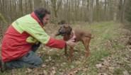 Speciaal team wil gewond wild in álle gebieden opsporen