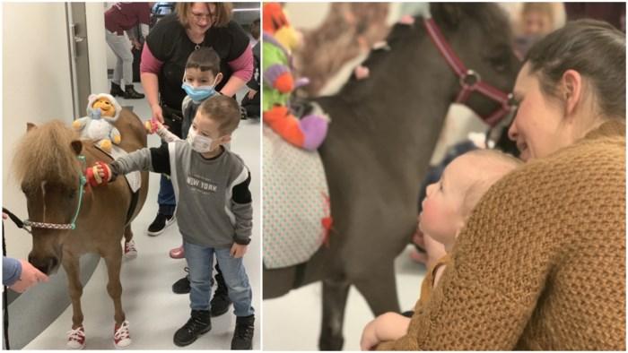 """Minipaardjes (met schoentjes aan) vrolijken patiëntjes op in ziekenhuis: """"Onze dieren hebben therapeutisch effect op de kinderen"""""""