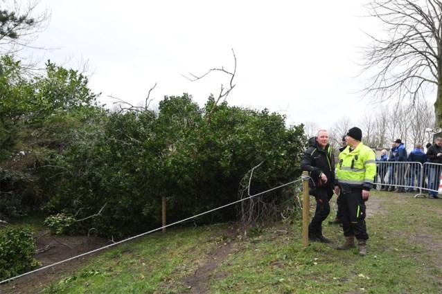 Dennis slaat toe: Cross dames in Hulst uitgesteld wegens boom op het parcours