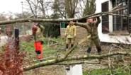 Storm Dennis: boom valt op huis in Sint-Niklaas