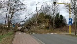 Storm Dennis rukt boom uit, Predikherenhoevestraat in Reet versperd
