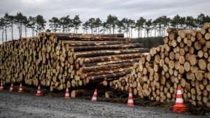 Fabriek van Tesla nabij Berlijn dreigt vertraging op te lopen door protest tegen boskap