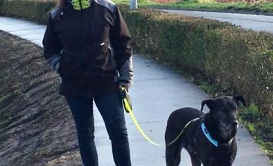"""Al drie honden vergiftigd met bijzonder dodelijk product: """"Tussen de eerste symptomen en het overlijden, zitten amper tien minuten"""""""