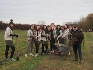 Scoutsgroep Were Di maakt de aanplant van 2075 bomen rond