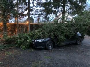 Bomen beschadigen auto's, luik kerk dreigt naar beneden te storten