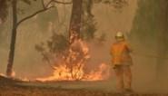 Drie vierde van Australische bevolking getroffen door bosbranden