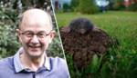 Hoe kan je een mol uit je tuin houden? En is dat wel nodig? Onze expert geeft tips