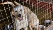 Vergoeding dierenasielen stijgt sterk