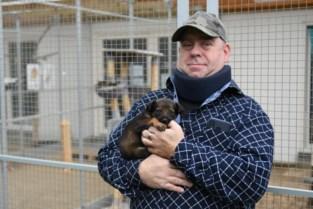 """Leuven gaat geld geven aan omstreden dierenasiel in plaats van er zelf een open te doen: """"Er is absoluut nog werk aan de winkel"""""""