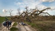 Verzekeraar AG ziet stormschade oplopen tot 60 miljoen euro