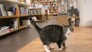 Renée is nieuwe kat van boekhandel (en ze is nu al een absolute hit op sociale media)