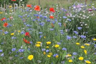 Gratis bloemenzaad voor Zemstenaars