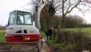 Project leert gemeenten hoe ze landschapselementen het best onderhouden