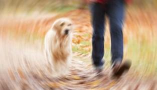 """Zestiger riskeert 7 jaar cel voor misbruik van dochter: """"Zelfs tijdens uitlaten van de hond"""""""
