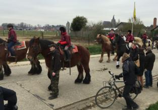 Hakendover doet oproep voor Brabantse trekpaarden