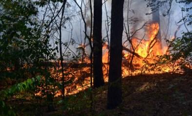 Wandelaar steekt uitwerpselen in brand en veroorzaakt bosbrand in Oostenrijk
