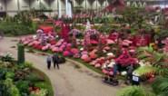 Chinezen sturen hun kat naar de Floraliën