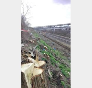 Buurtbewoners geschokt door bomenkap in spoorwegberm