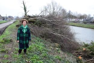 """Groen parlementslid Mieke Schauvliege hekelt kapwerken langs kanaal Gent-Brugge: """"Vooral kappen van grote zones in één beurt, is schadelijk"""""""