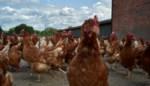 Werkstraf van 120 uur voor overval op kippenkraam in Londerzeel