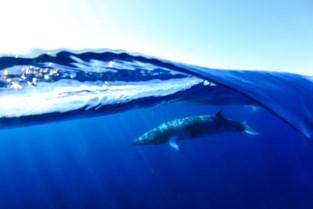 """Ines (27) scoort in wedstrijd voor onderwaterfotografie: """"Ik wil mensen inspireren om meer buiten te komen"""""""