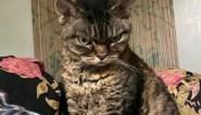 """Boos kijkende kat verovert internet: """"Maar ze is eigenlijk heel erg lief"""""""