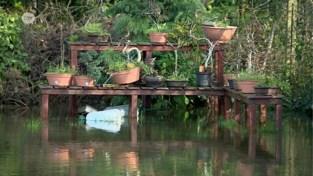 """Tuin van koppel in Schelle staat al maanden onder water: """"Dweilen met de kraan open"""""""