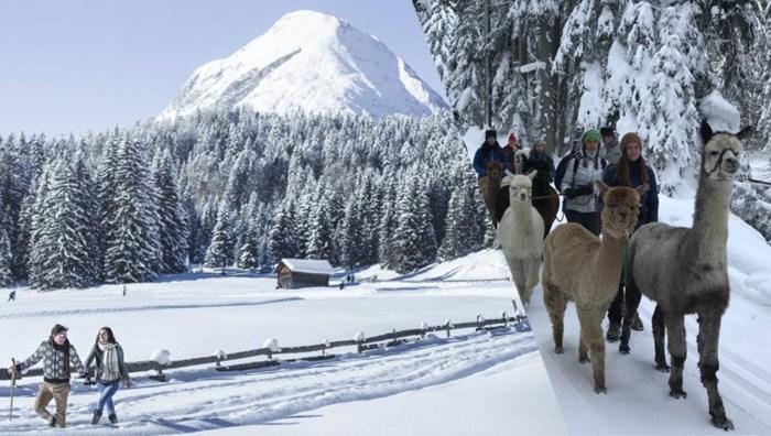 Het moet niet altijd skiën zijn: winters wandelen in Tirol