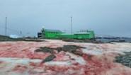 Antarctica staat in bloei en kleurt plots bloedrood