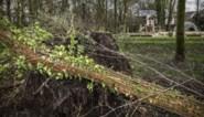 Stormschade in Limburg met omgewaaide bomen en kapotte daken