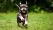 70 procent van de honden heeft gedragsproblemen