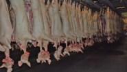 Dierenrechtenorganisaties voeren actie aan slachthuis in Ruiselede