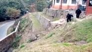 Bewakers verkleden zich als gorilla's om .. aapjes weg te jagen