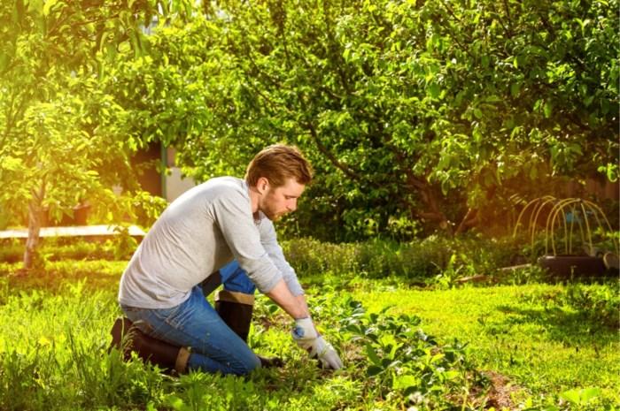 Bestand tegen wateroverlast en droge zomers: hoe maak je je tuin klimaatbestendig?