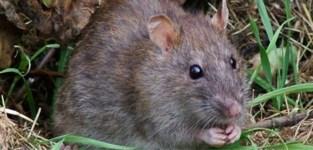 Rat zet honderdtal gezinnen zonder stroom