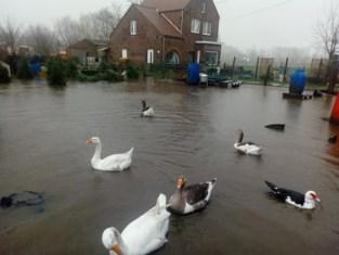 """Waterlopen dicht bij alarmpeil door regenval: """"Ze zijn uit de oevers getreden"""""""