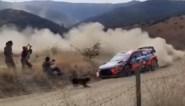 Wat een geluk: Thierry Neuville kan maar nét aanrijding met overstekende hond vermijden in Rally van Mexico