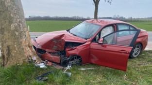 BMW knalt tegen boom aan