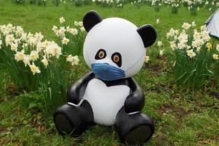 Zelfs gepimpte beren moeten wijken door corona: